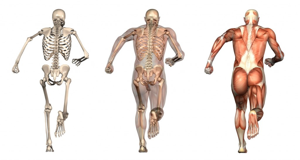 anatomy_runner